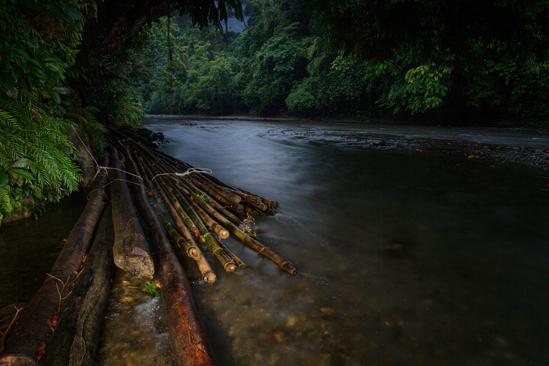 A stack of bamboo poles in a river near Tangkahan