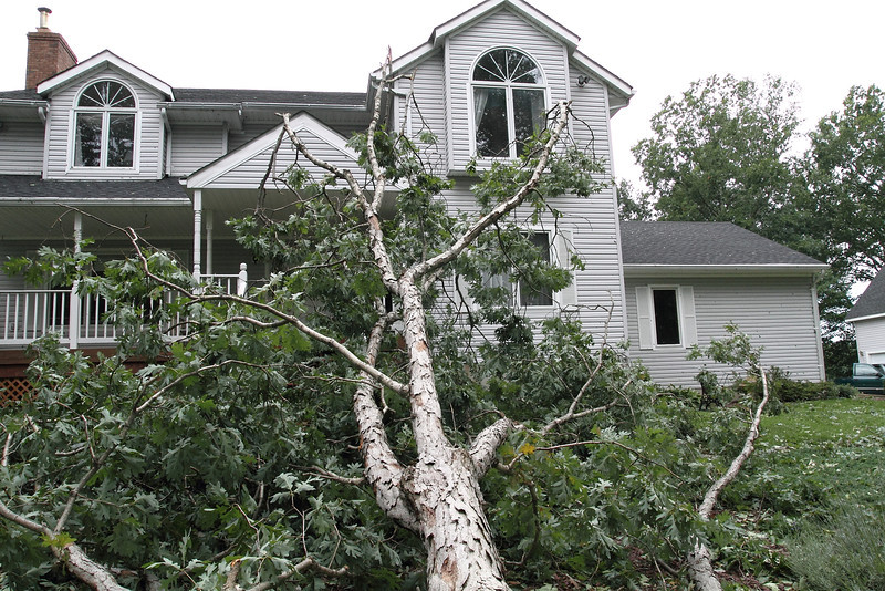 """It was getting dark so I wanted to check outside once more for any damage.  I waited till the gusts slackened - opened the front door - peeked around - walked to the end of the porch.   Then I looked up at the trees and saw them start to """"violently sway"""" again.  I ran back to the door - opened it while hearing a CRACK - ran inside WHILE the above tree was falling .......... SLAMMED the door quick as the tree hit the ground!  I was thinking, """"Close the door quick"""" (as if that might keep out the TREE).  I realized what had happened and ran to look out Lexie's bedroom and there before my eyes - about one or two feet from the window was the BEAST!   I still can't believe I was on the porch when it happened!!!"""