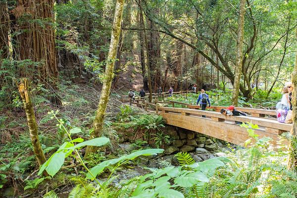 San Jose - 2018 - Muir Woods