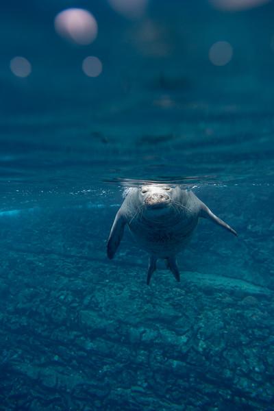 monk seals-7.jpg