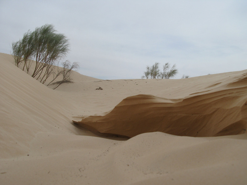 Dunes Structure.jpg
