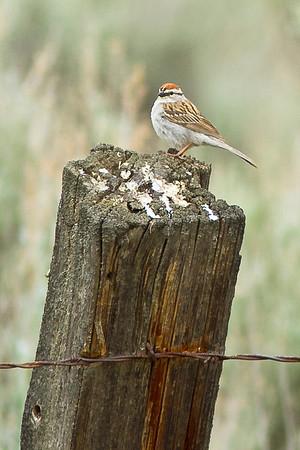 Bird Sightings (Not Great Photographs)