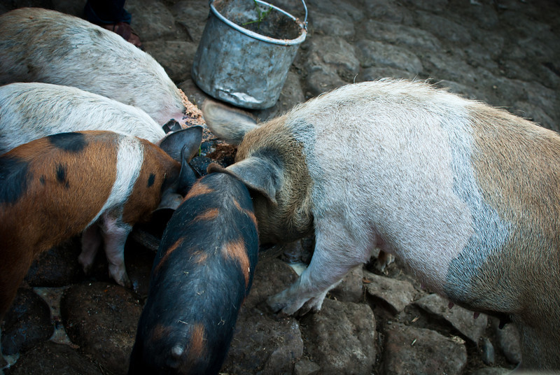 Tarija 201205 Rosillas La Torre (4).jpg