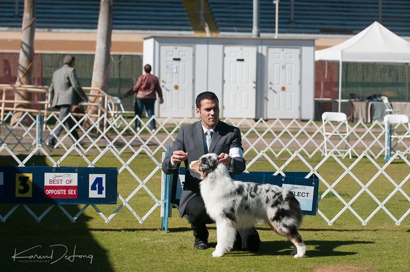 20170205_Australian Shepherds_Lost Dutchman Kennel Club-93.jpg