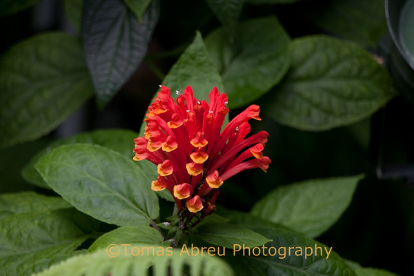 Fairchild Tropical Gardens II