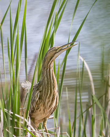 Central Indiana Birds 2014
