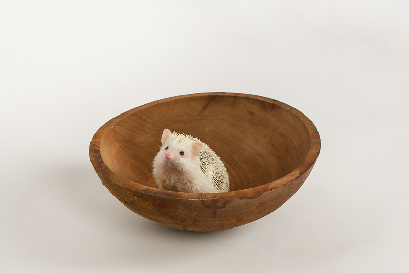 Oh, hello there. I'm just hanging out in this wooden bowl.