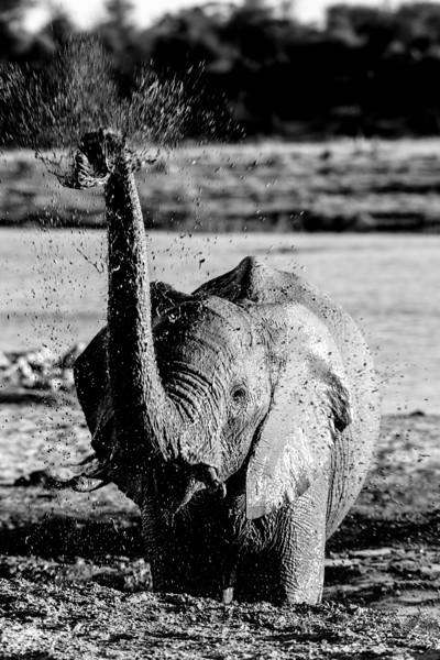 NGSE_BotswanaB2018_kailadrayton-9491.jpg