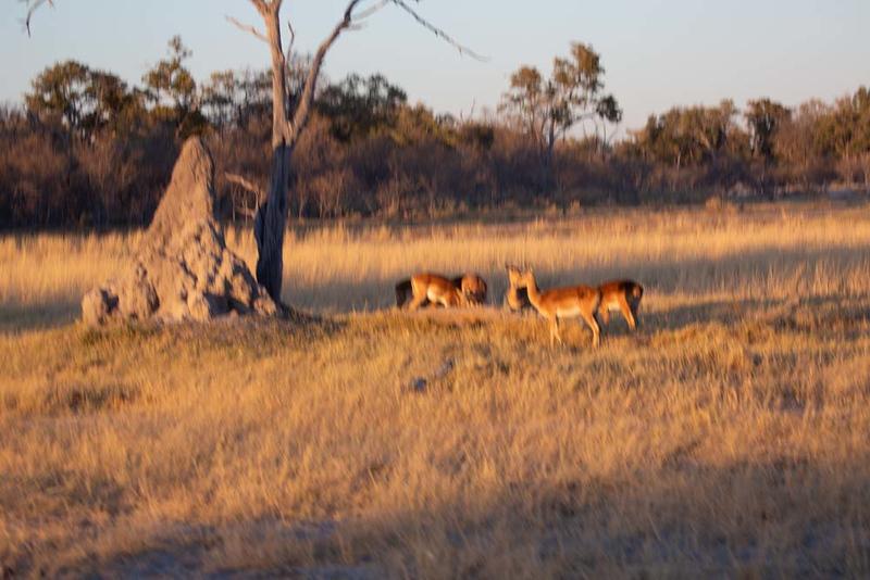Africa1353.jpg