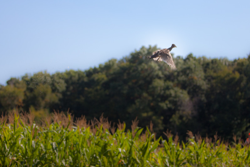 Hunting - Wild Wings - September - 2013 - 0218.jpg