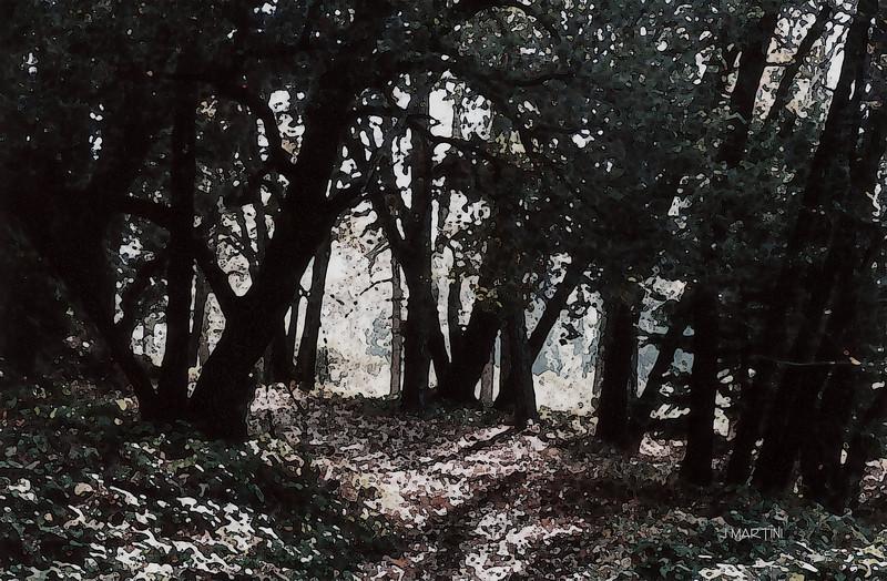path (b&w) 1-4-2009.jpg