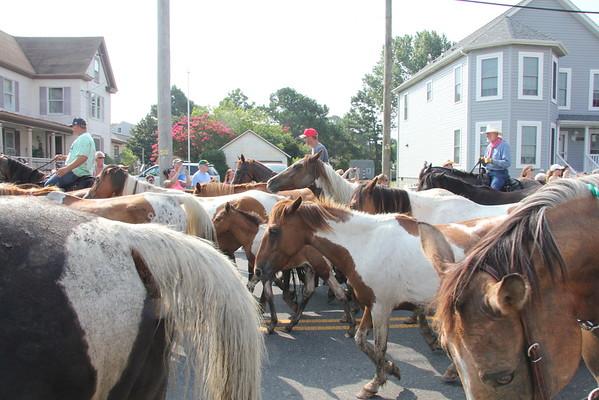 2015 Chincoteague Horses
