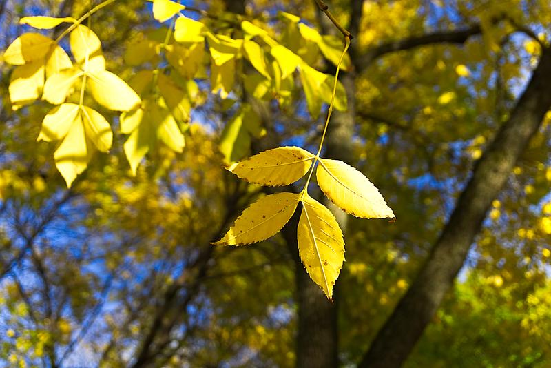 Quad leaf detail .png