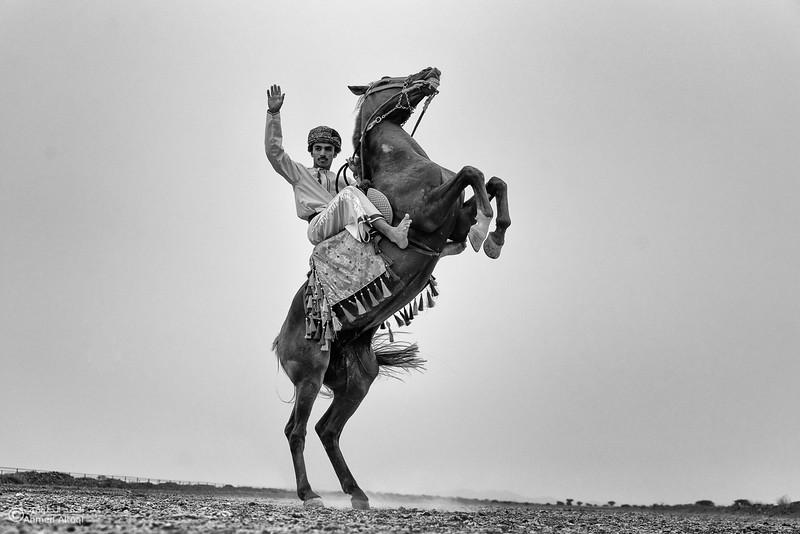 DSC01615-(1)Bahla-camels- B&W.jpg