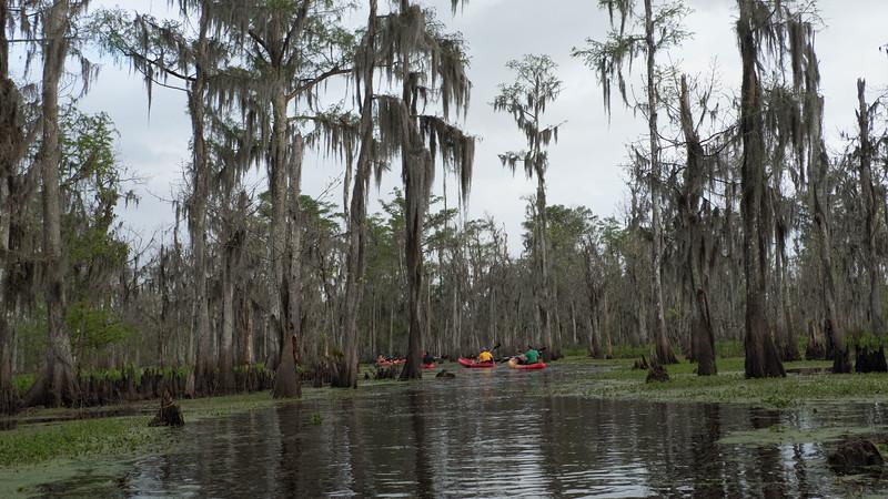 ManchacSwamp-6943.jpg