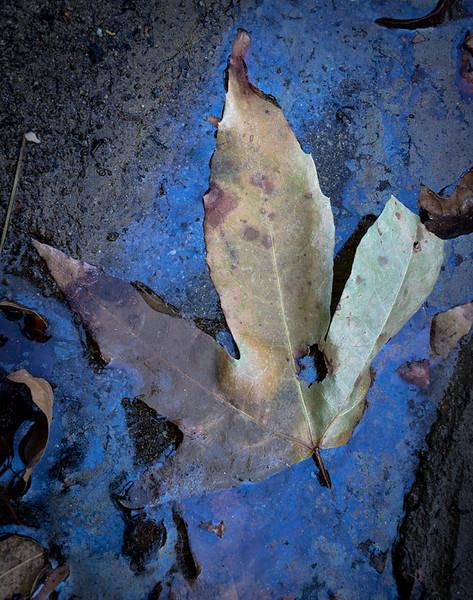 Castaic_Creek_Fall_Color_Southern_California_DSC3492.jpg