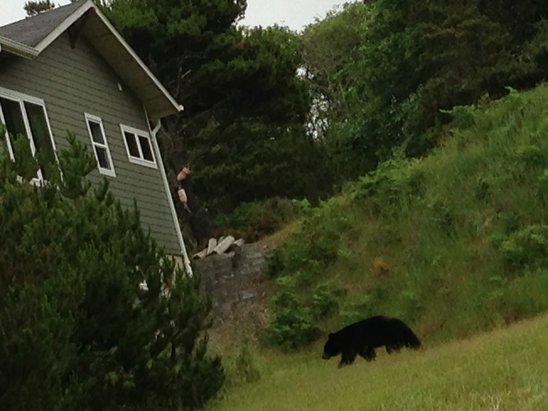 Bear sighting a few blocks south of the house on I Place.