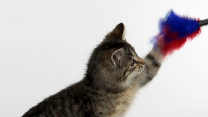 kitten_147_slow.mov