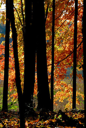 Tinkers Creek
