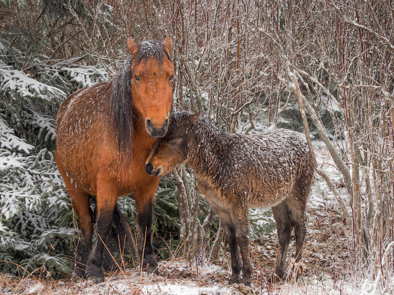 57 Nov 24 Foal and Mare  (1 of 1).jpg