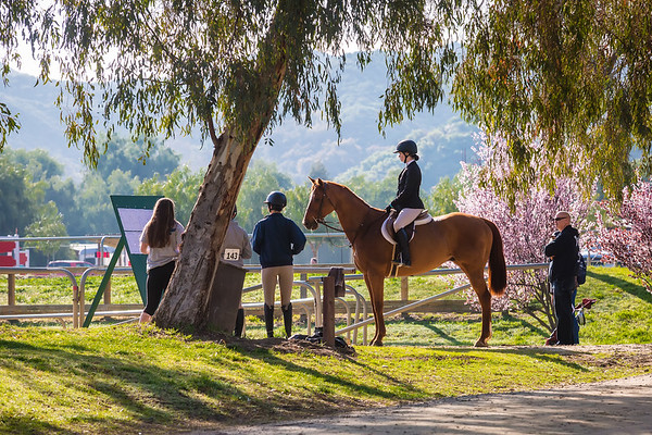 Thoroughbred Classic Horse Show 2019
