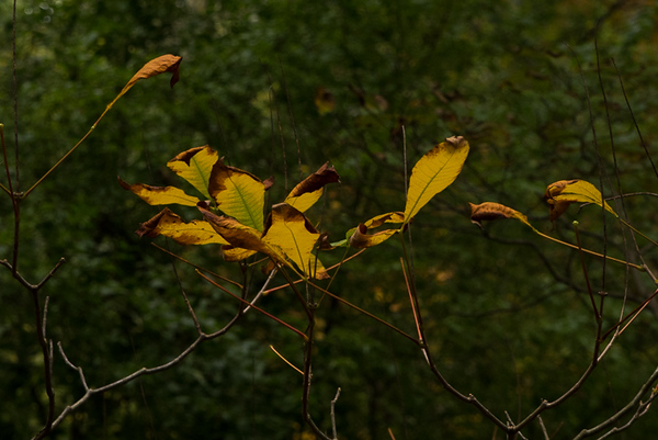 2017-Week 42 - Yellow Leaves At Buck.jpg