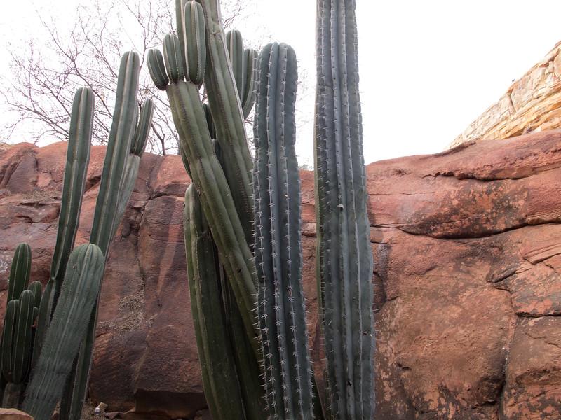 Even more cactus
