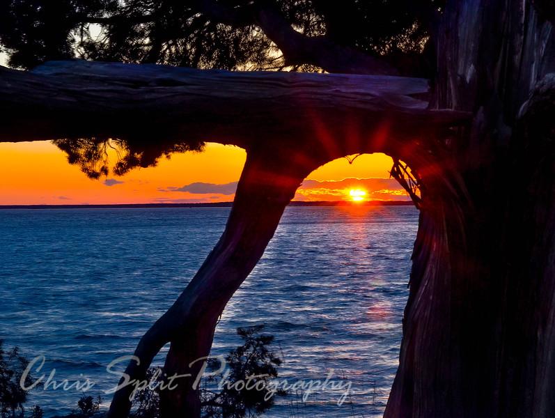 sunset through tree.jpg