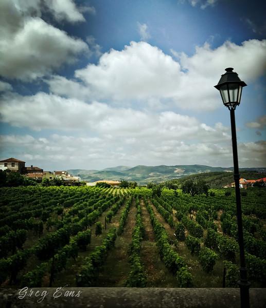 Wine vineyard in Favaios, Portugal.