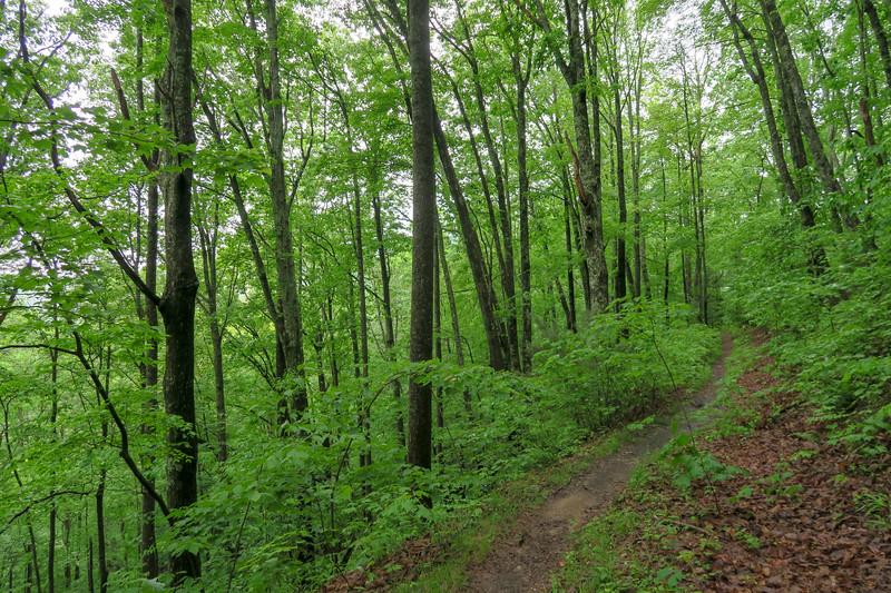 Lower Sidehill Trail -- 2,650'