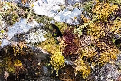 NZ wrens