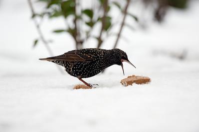Vogels in de winter dec2009