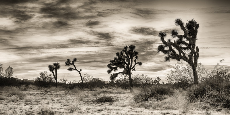 Joshua Tree-0126_HDR-Silver-2.jpg