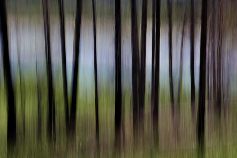 treepano.jpg