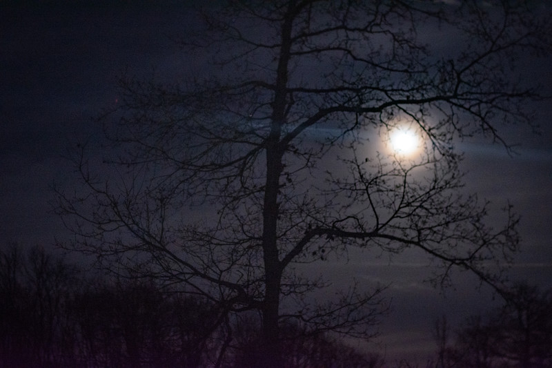 20200110-1758-Starlight Trail Relays #3 - Calke Abbey-0009.jpg
