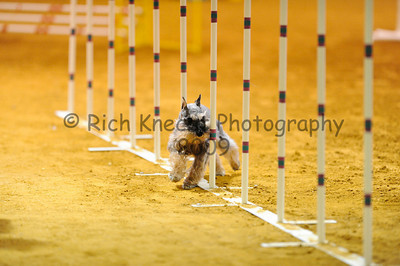 Garden State Norwegian Elkhound Club AKC Agility Trial November 7-8, 2009