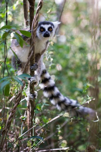 Madagascar_2013_FH0T1142.jpg