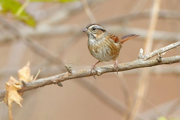 2012-11-02 Riverlands Migratory Bird Sanctuary