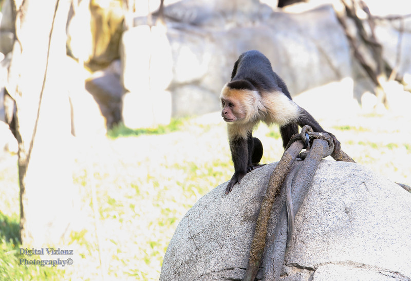 2016-07-17 Fort Wayne Zoo 017LR.jpg
