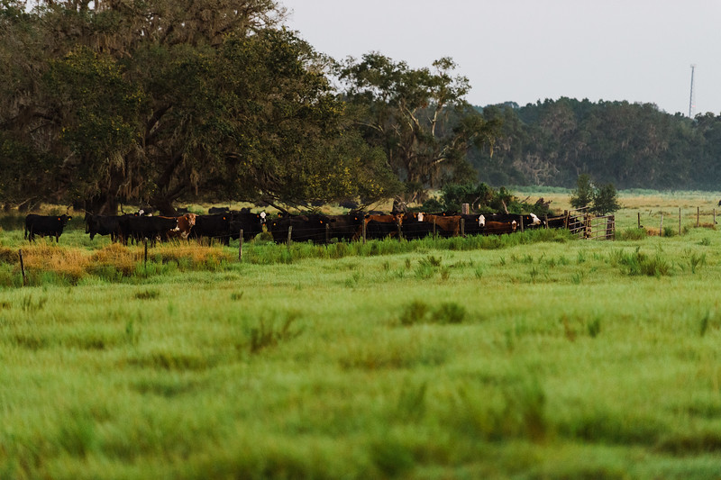 Barthle Cattle-2 (15 of 102).jpg