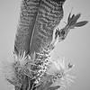 Bottle-brush and Feather