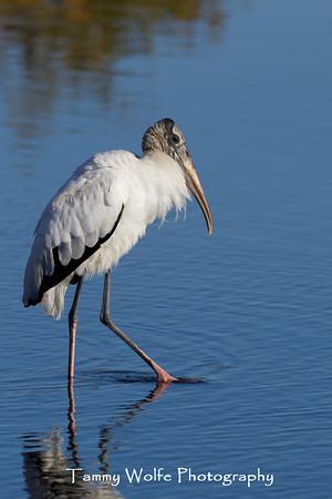Stork, Wood