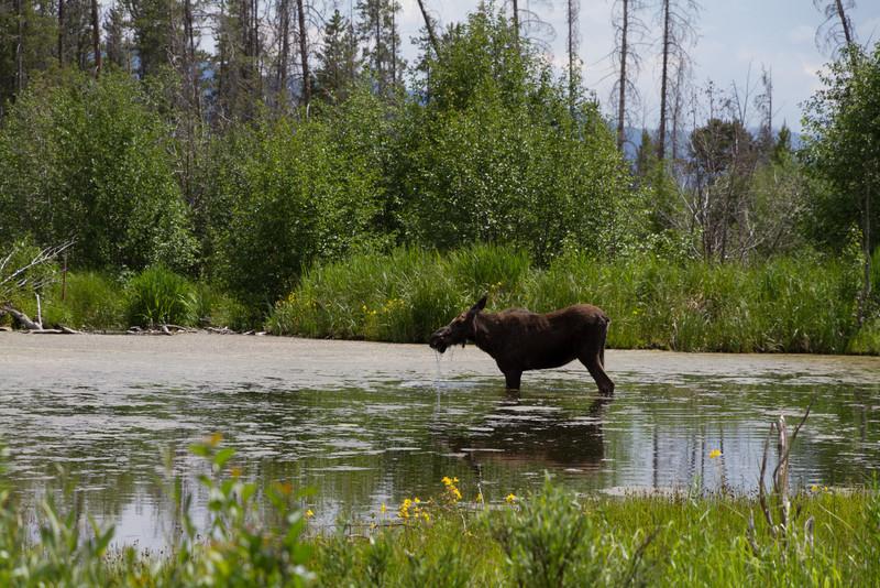2011_07_05 Wyoming 138.jpg
