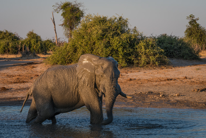 Botswana_June_2017 (4049 of 6179).jpg