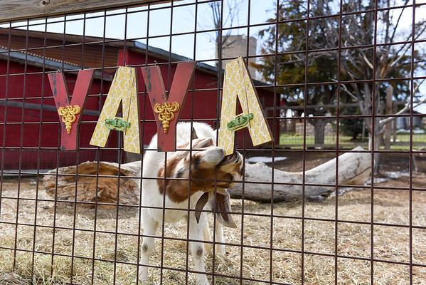 YaYa Palooza 3-21-16 REEB Ranch West
