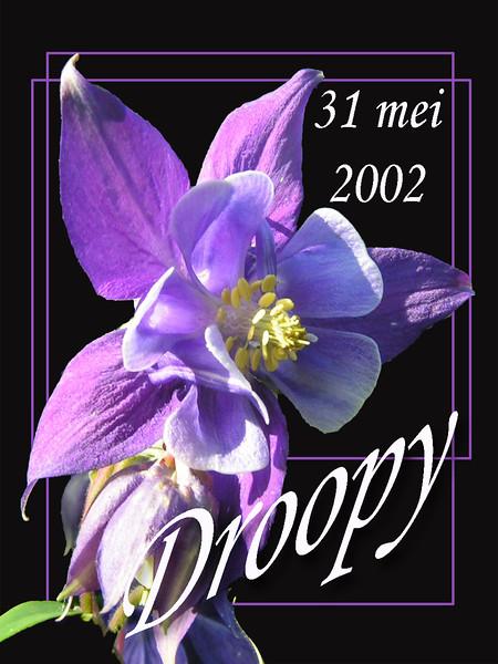 Droopy 0 Tittel Akelei.jpg