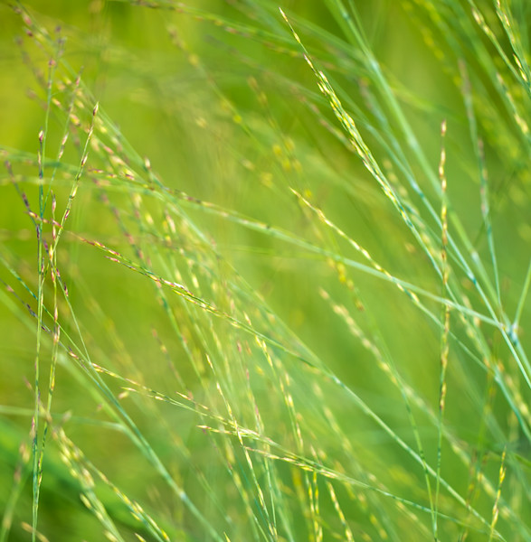 july grass 2014  10