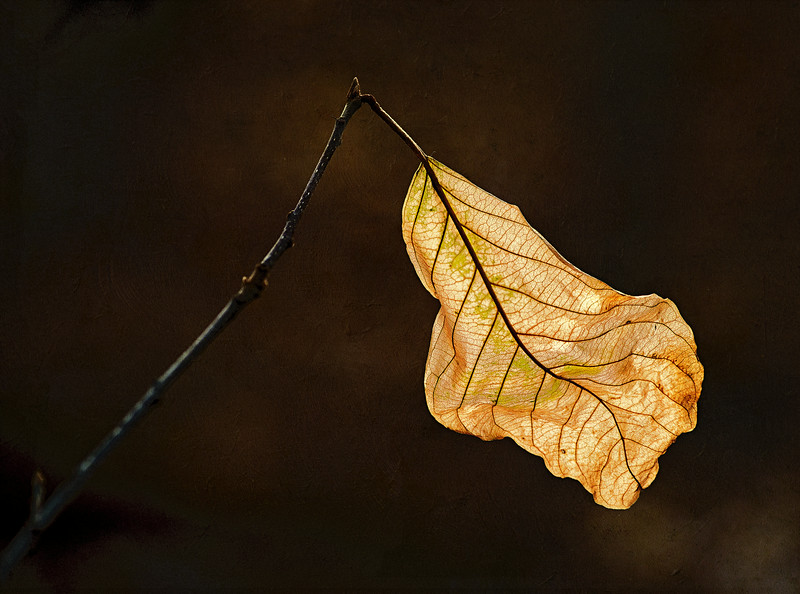 the last leaf_Nov 25-2012_02-Edit.jpg