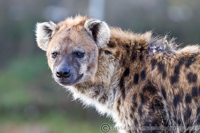 Colchester Zoo 26-01-13