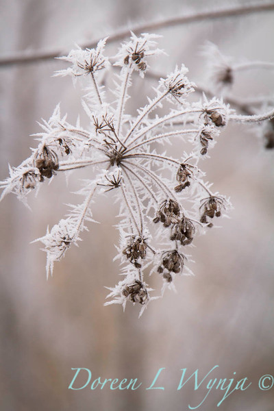 Winter frost_9319.jpg